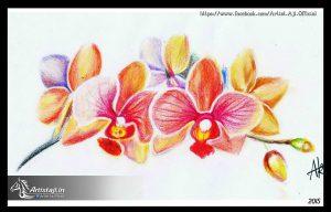 flower_draw_by_artistaji/